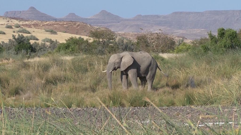 Elefant beim Malansrus Tented Camp in Namibia | Abendsonne Afrika