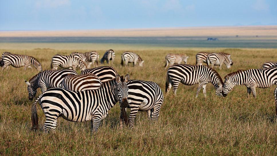 HEADER Traumhaftes Tansania, Tansania | Abendsonne Afrika