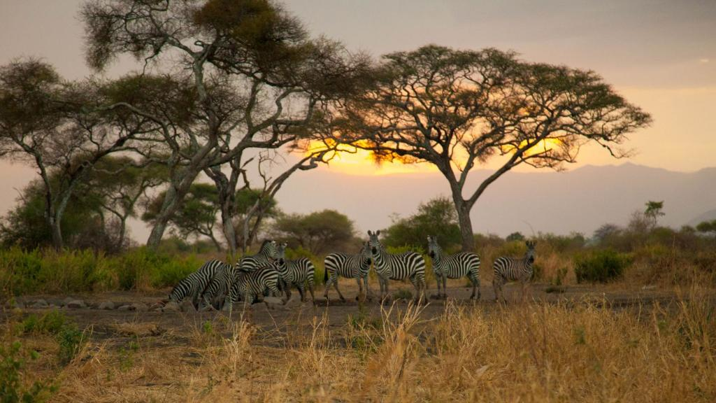 Wasserloch in der Tarangire Simba Lodge in Tansania   Abendsonne Afrika