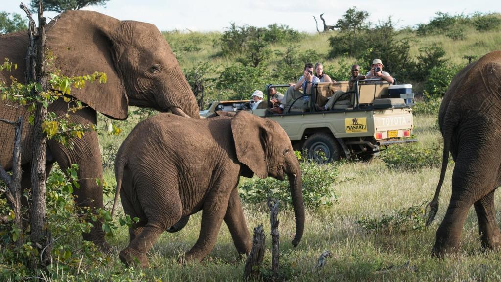 Wildbeobachtungsfahrt in Mashatu, Botswana | Abendsonne Afrika