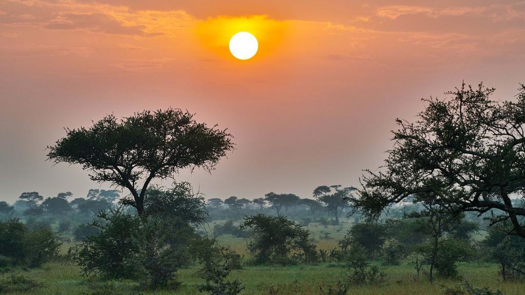 HEADER Big Five, Tansania | Abendsonne Afrika
