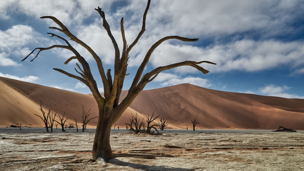 Dead Vlei in Namibia | Abendsonne Afrika