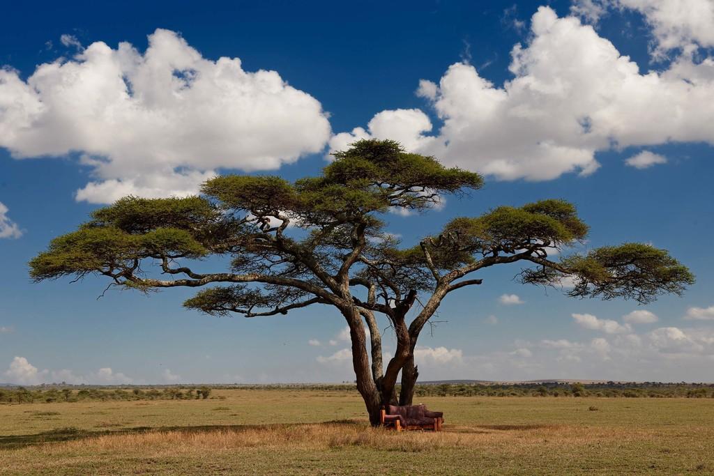 Akazie in Tansania   Abendsonne Afrika