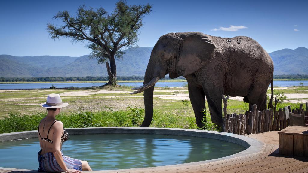 Pool und Elefant im Nyamatusi Camp in Simbabwe | Abendsonne Afrika