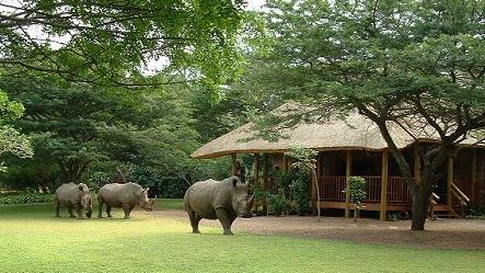 Nashörner im Falaza Game Park & Spa in Südafrika   Abendsonne Afrika