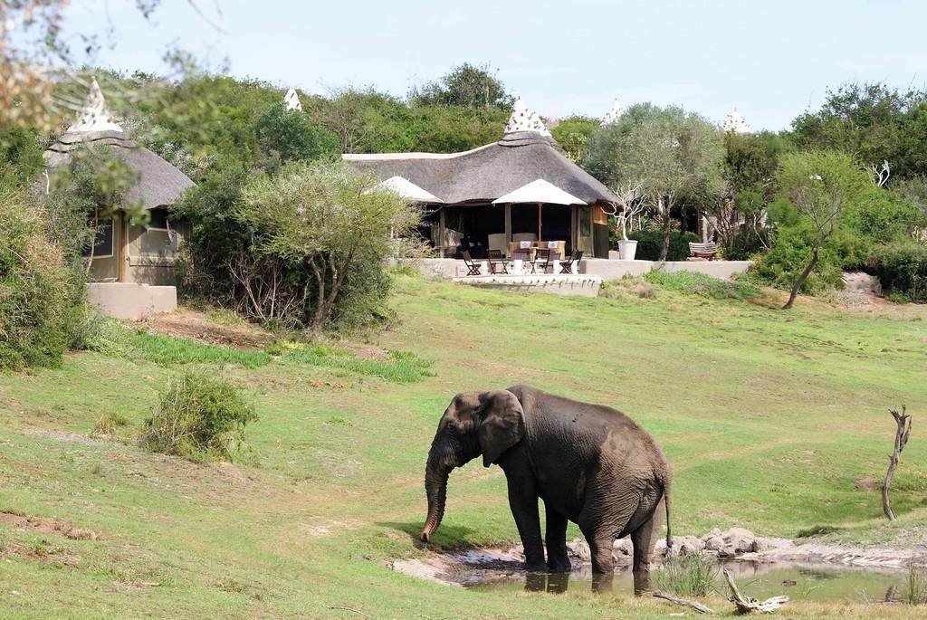 Elefant bei der Amakhala Safari Lodge in Südafrika | Abendsonne Afrika