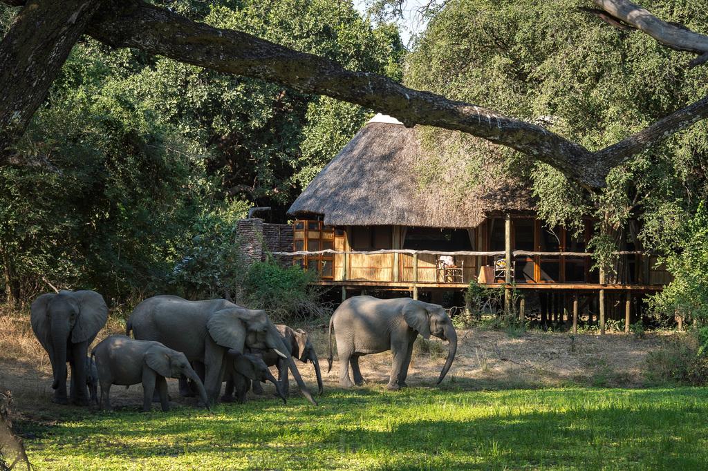 Elefantenherde vor dem Bilimungwe Bushcamp in Sambia | Abendsonne Afrika