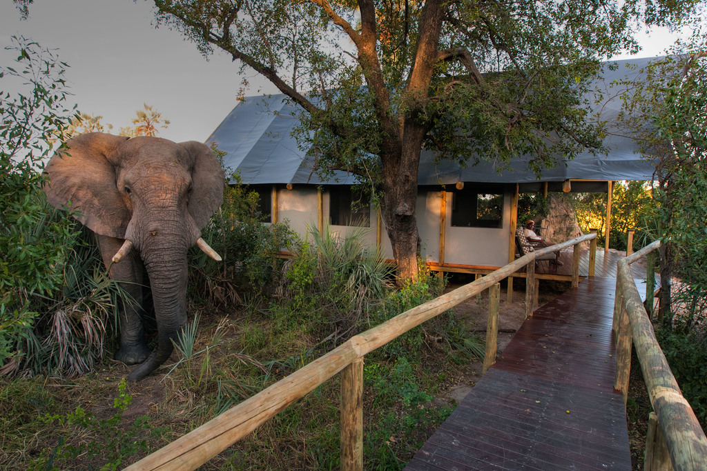 Elefantenbesuch im Chitabe Lediba Camp in Botswana | Abendsonne Afrika