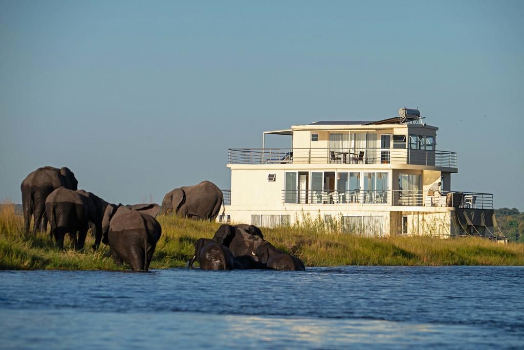 Elefanten im Fluss beim Chobe Princess Hausboot in Botswana | Abendsonne Afrika