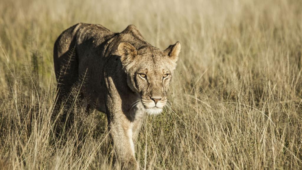 Header Geheimnisse der Kalahari