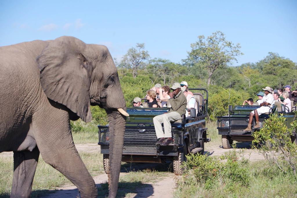 Elefant bei einer Wildbeobachtungsfahrt der Elephant Plains Game Lodge in Südafrika | Abendsonne Afrika