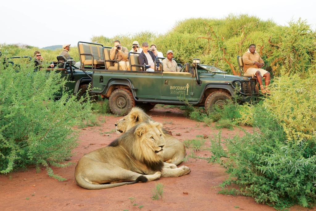 Wildbeobachtungsfahrt der Impodimo Game Lodge in Südafrika | Abendsonne Afrika