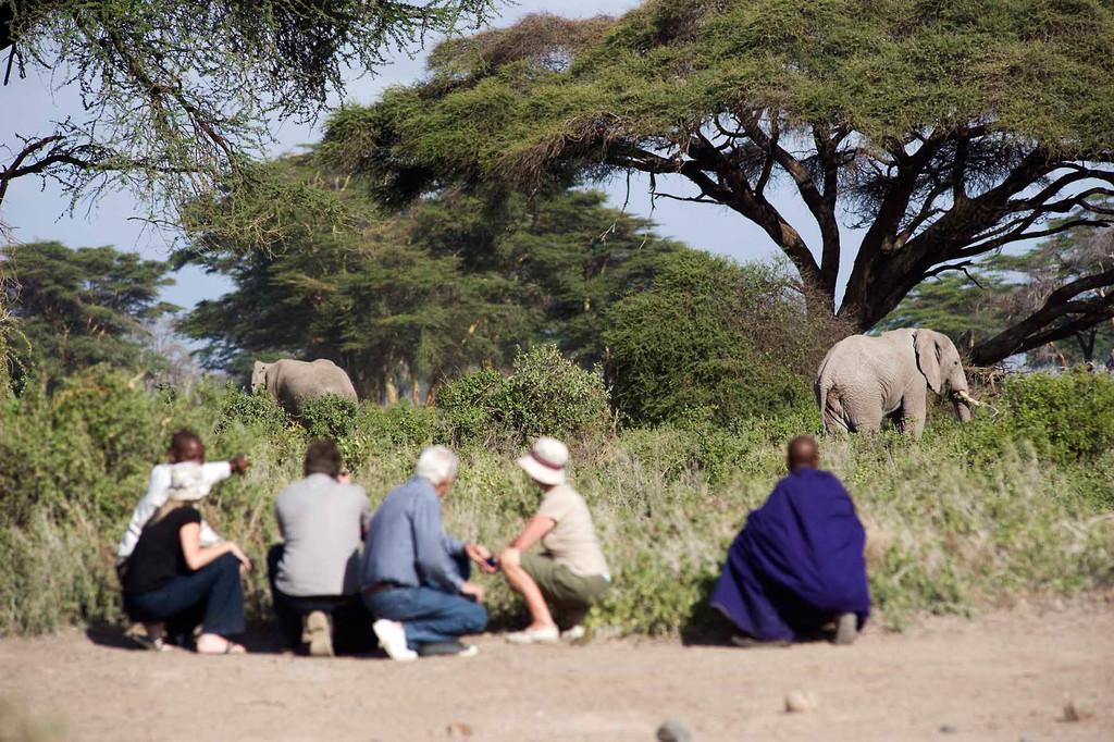 Wildbeobachtung im Kambi ya Tembo Camp in Tansania | Abendsonne Afrika