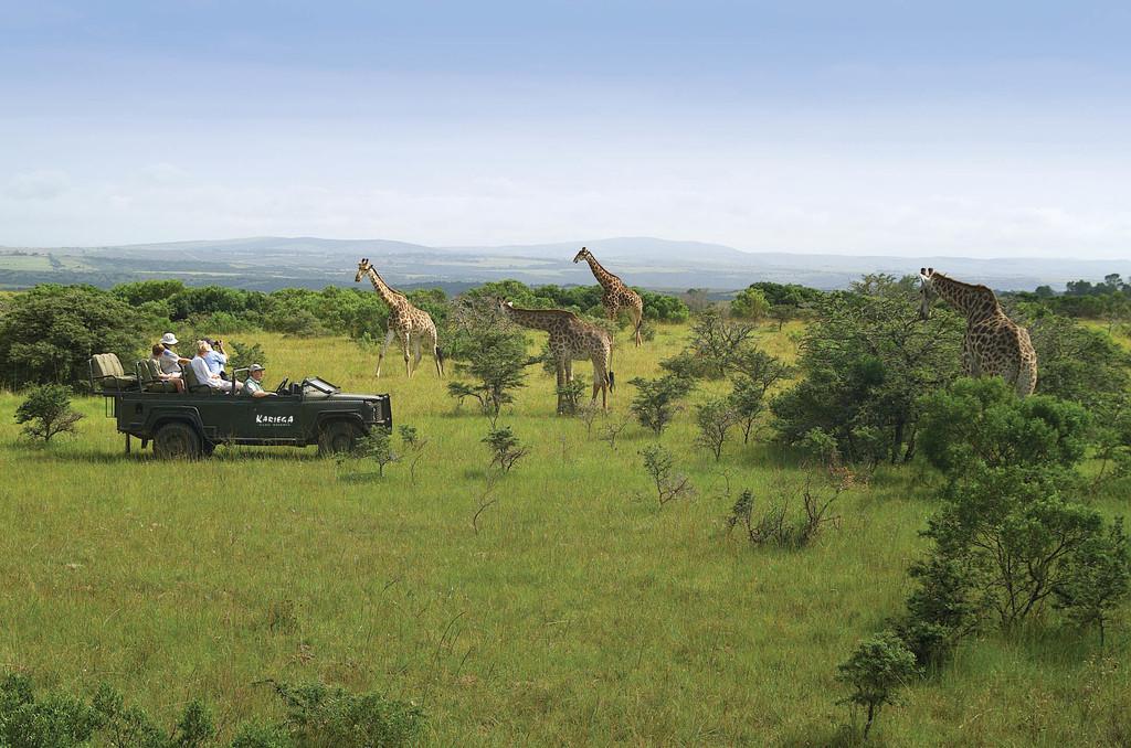 Wildbeobachtungsfahrt der Kariega Ukhozi Lodge in Südafrika | Abendsonne Afrika
