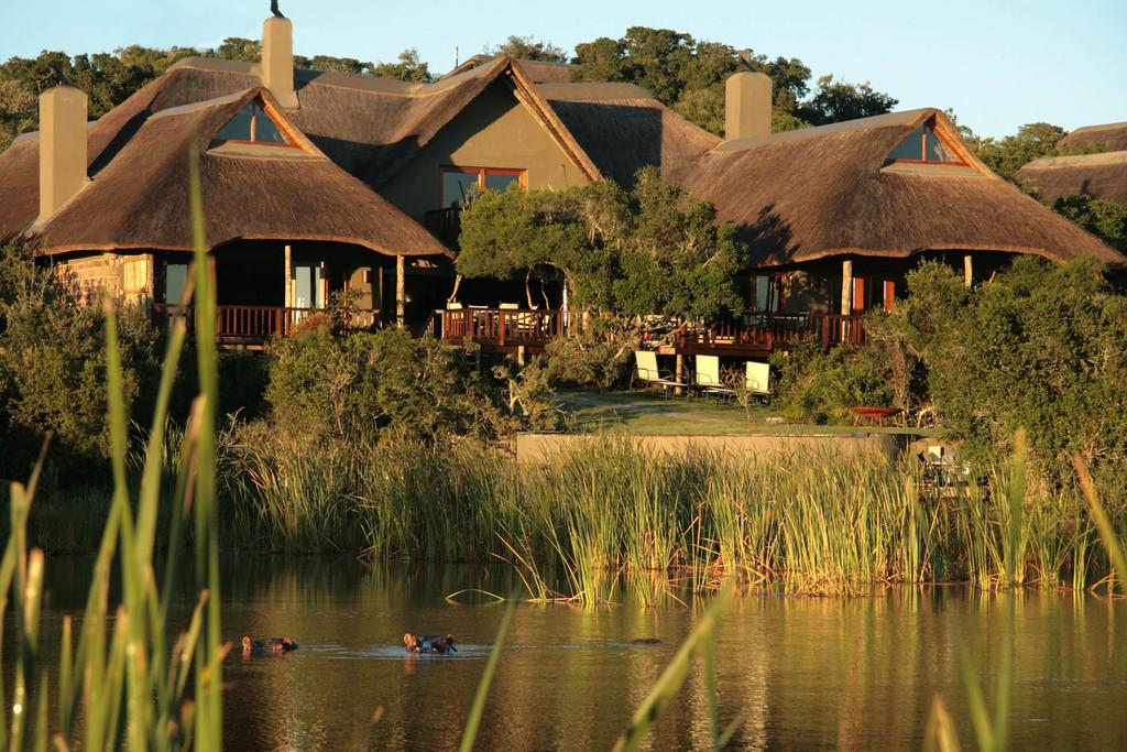 Flusspferde vor der Kichaka Luxury Game Lodge in Südafrika | Abendsonne Afrika