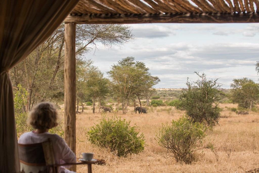Elefanten vor dem Kuro Camp in Tansania | Abendsonne Afrika