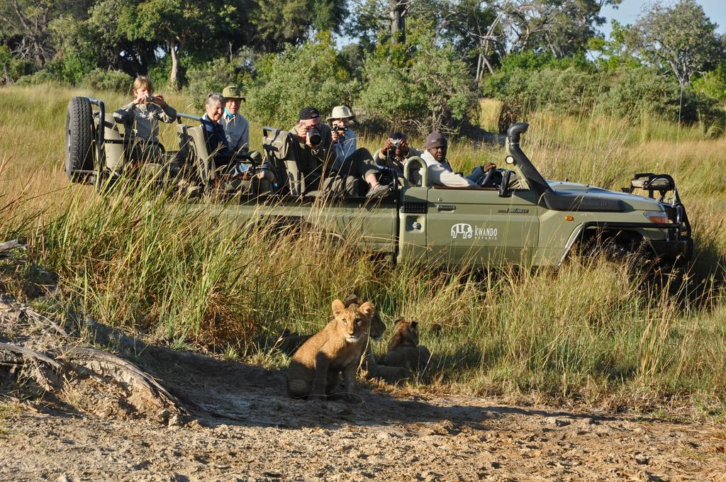 Löwenbabys bei einer Wildbeobachtungsfahrt des Lebala Camps in Botswana | Abendsonne Afrika