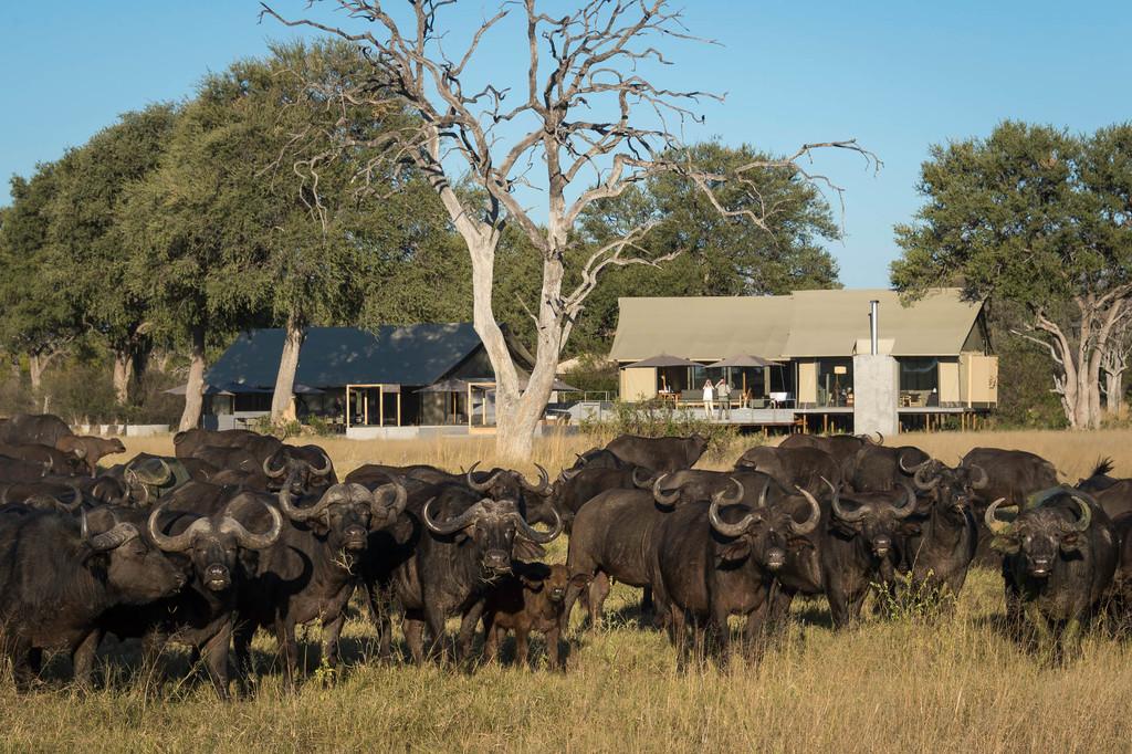 Büffelherde im Hwange Nationalpark in Simbabwe   Abendsonne Afrika