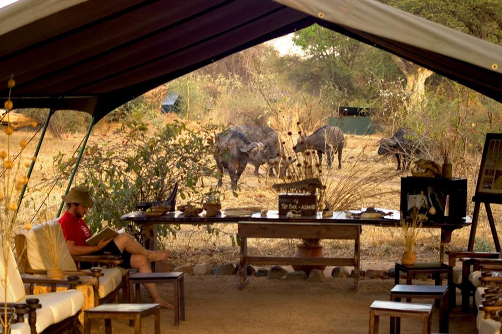 Büffel bei der Lounge des Mdonya Old River Camps in Tansania | Abendsonne Afrika