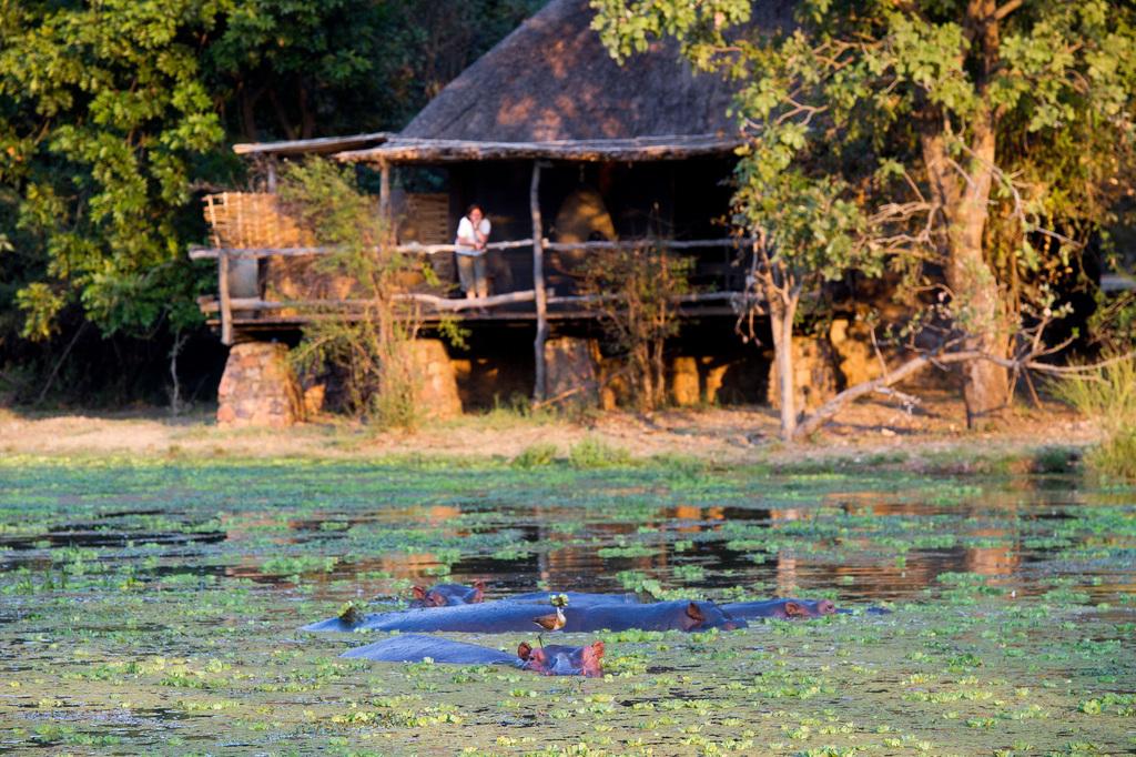 Tierbeobachtungen von der Mfuwe Lodge in Sambia | Abendsonne Afrika