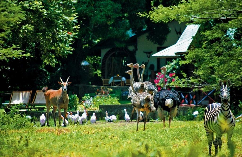 Tiere im Garten der Mount Meru Game Lodge in Tansania | Abendsonne Afrika