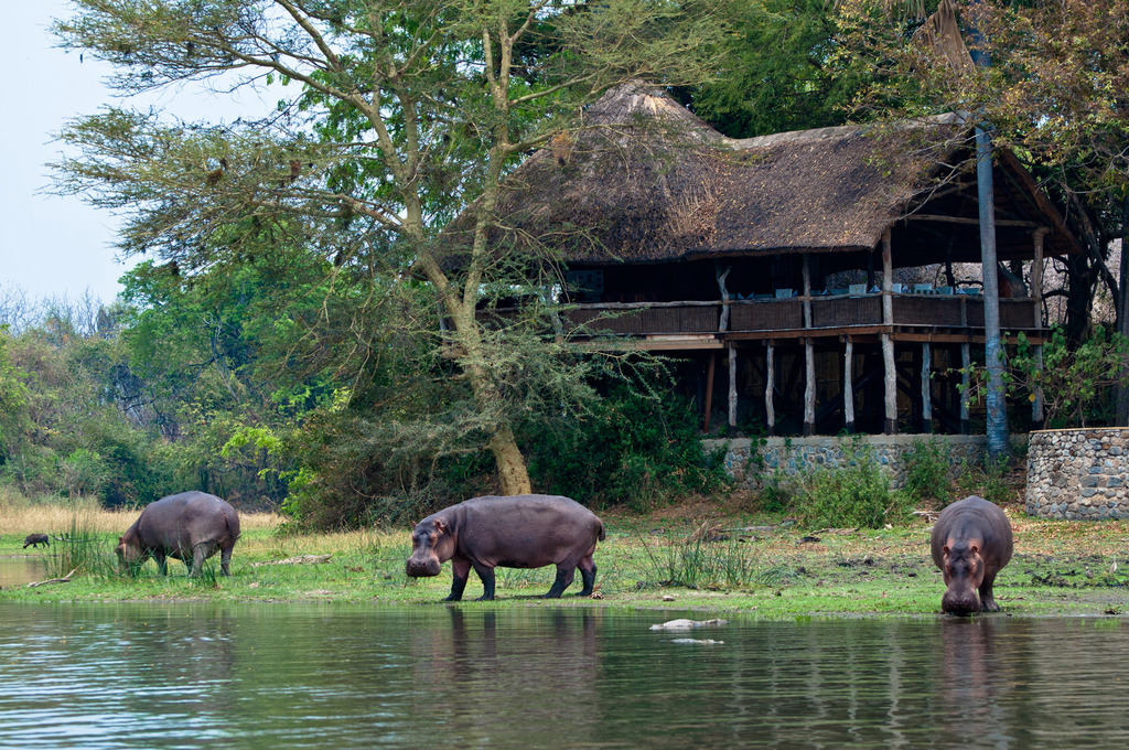 Flusspferde vor der Mvuu Lodge in Malawi | Abendsonne Afrika