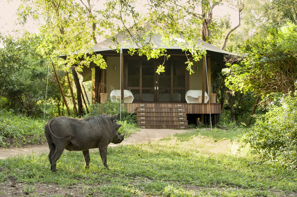 Warzenschwein beim andBeyond Ngala Tented Camp in Südafrika | Abendsonne Afrika