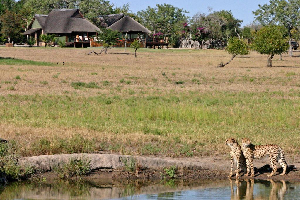 GEparden bei der Nkorho Bush Lodge in Südafrika | Abendsonne Afrika