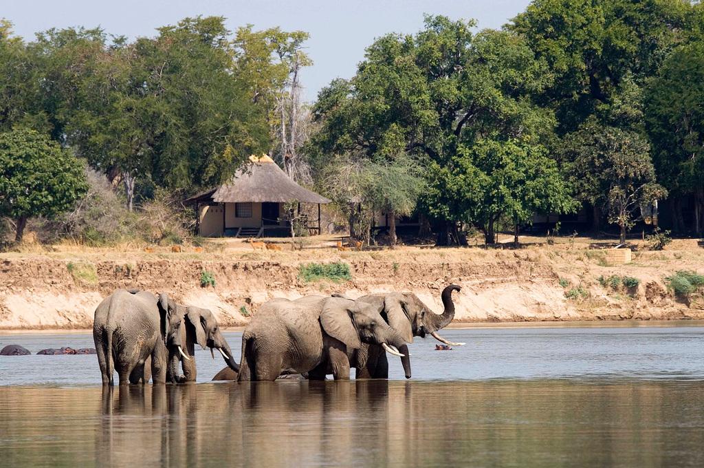 Elefanten vor dem Nsefu Camp in Sambia | Abendsonne Afrika
