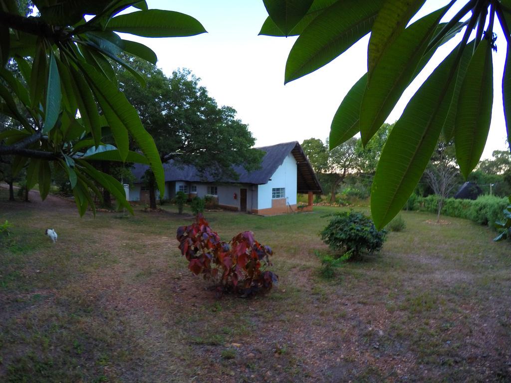 Gartenanlage des Pioneer Camps in Sambia | Abendsonne Afrika