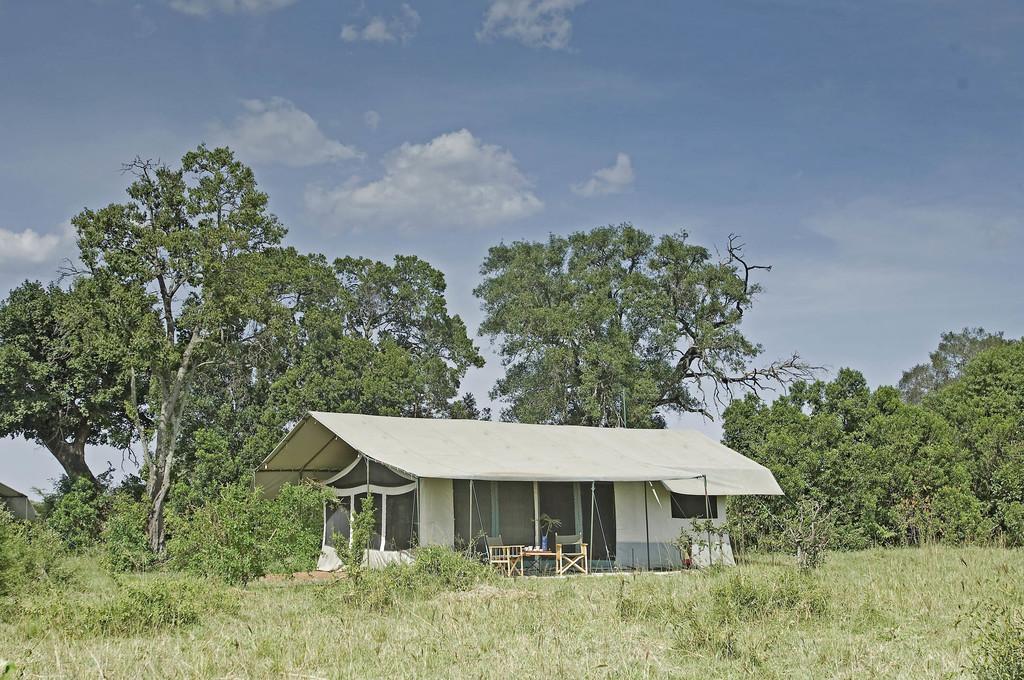 Natur beim Porini Lion Camp in Kenia | Abendsonne Afrika