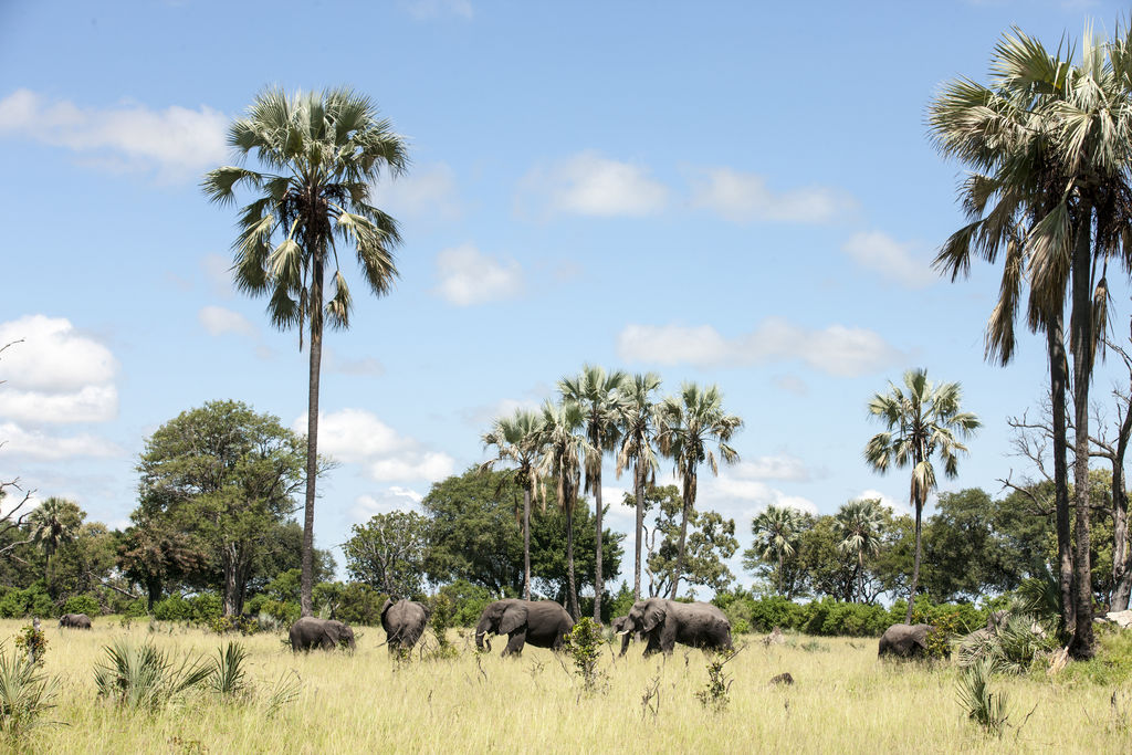Elefanten beim Seba Camp in Botswana   Abendsonne Afrika