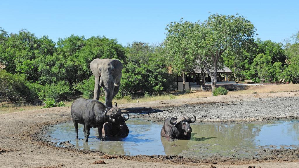 Elefant und Büffel beim Tangala Safari Camp in Südafrika   Abendsonne Afrika