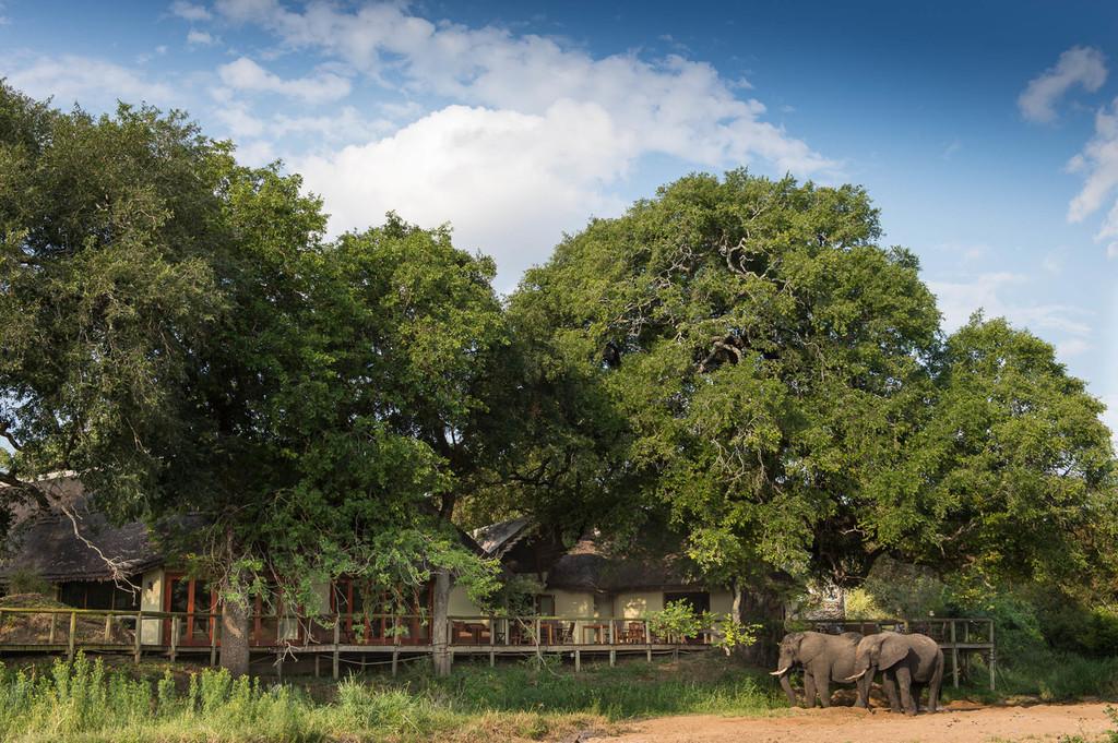Elefanten bei der Tintswalo Safari Lodge in Südafrika   Abendsonne Afrika