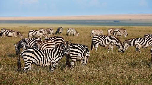 Traumhaftes Tansania | Abendsonne Afrika