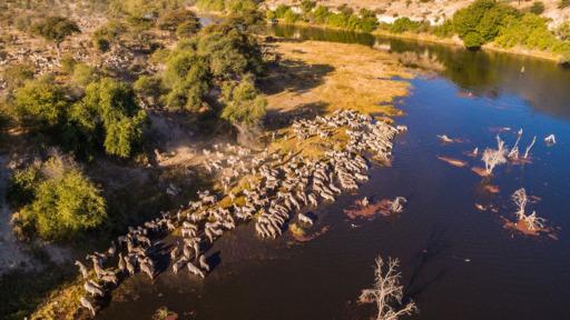 Botswana Intensiv | Abendsonne Afrika