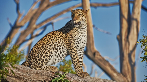 Safariromantik in Botswana – deutschsprachig | Abendsonne Afrika