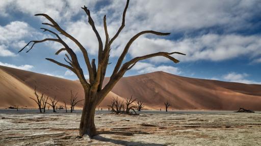 Namibias Klassiker | Abendsonne Afrika