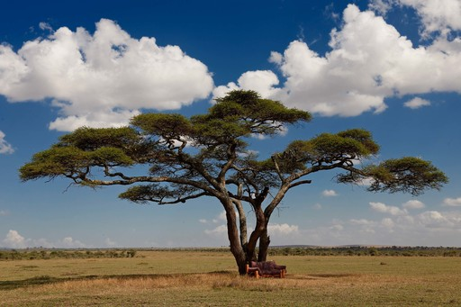 Klassisches Tansania | Abendsonne Afrika