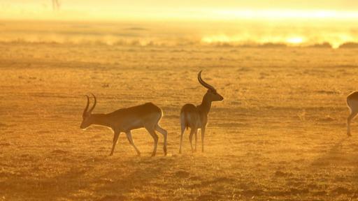 Botswana Erleben | Abendsonne Afrika