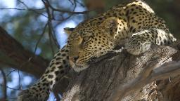 HEADER Naturparadies Botswana