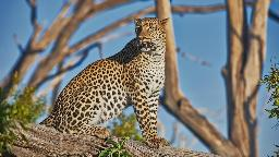 HEADER Safariromantik, Botswana
