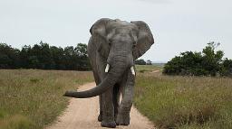 Elefant im Adoo Elephant Nationalpark in Südafrika | Abendsonne Afrika