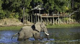 Elefant im Chindeni Bushcamp in Sambia | Abendsonne Afrika