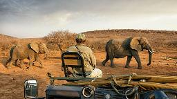 Wildbeobachtung in der Limpopo Provinz in Südafrika | Abendsonne Afrika