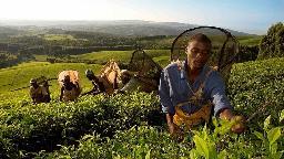 Header Traumreise Malawi - der vielfältige Süden | Abendsonne Afrika