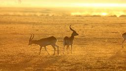 Header Botswana Erleben | Abendsonne Afrika