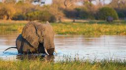 HEADER Botswana Rhino Trail