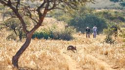 Buschwanderung in der Kalahari, Tswalu Game Reserve