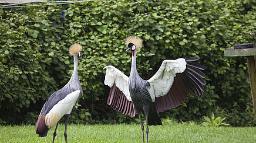 Vögel im Birds of Eden Park in Südafrika | Abendsonne Afrika